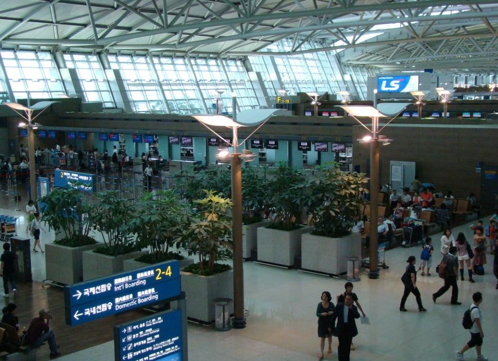 Деревья в аэропорту