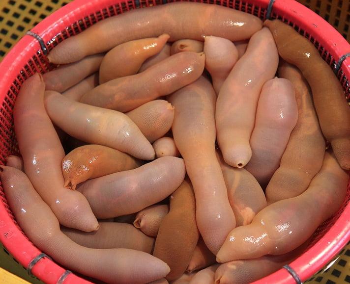 морские черви гебуль