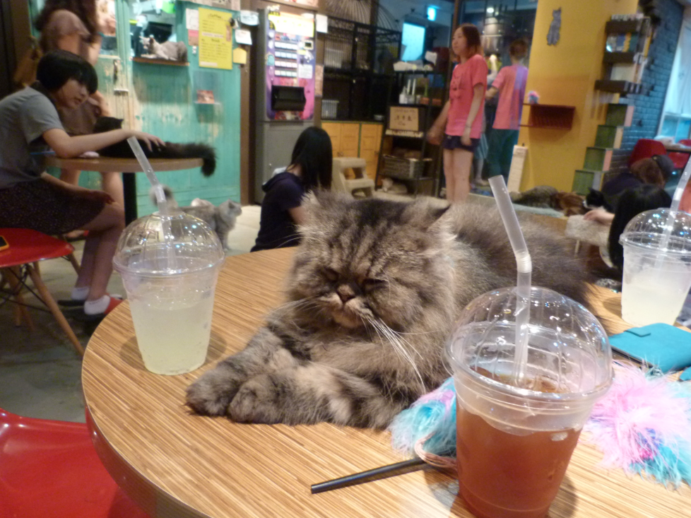 Кошачье кафе в районе Ганнам, Сеул