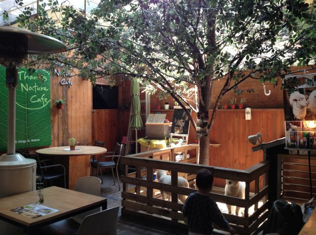 Кафе, в котором живут овечки Thanks Nature Cafe в Сеуле