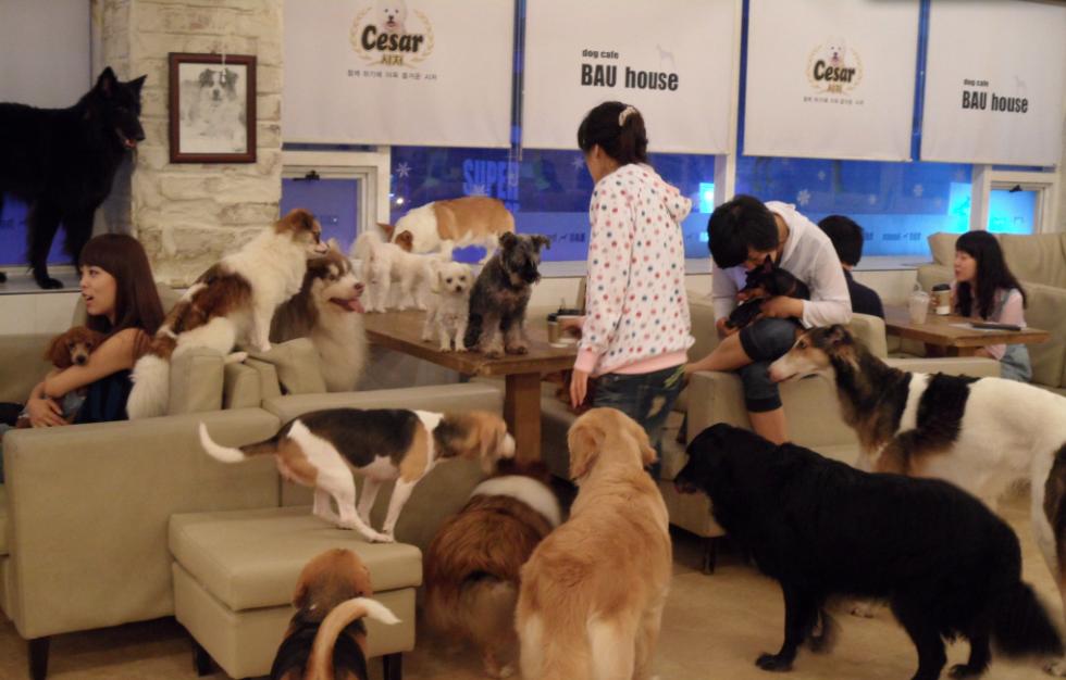 Собачье кафе Bau House в Сеуле