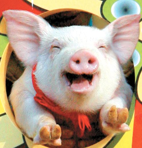 Улыбающаяся свинка в корейском ритуале