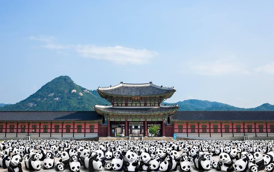 Сеул, панды