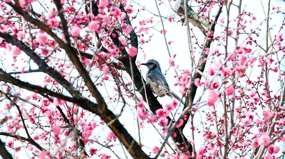 Птичка на ветках сакуры